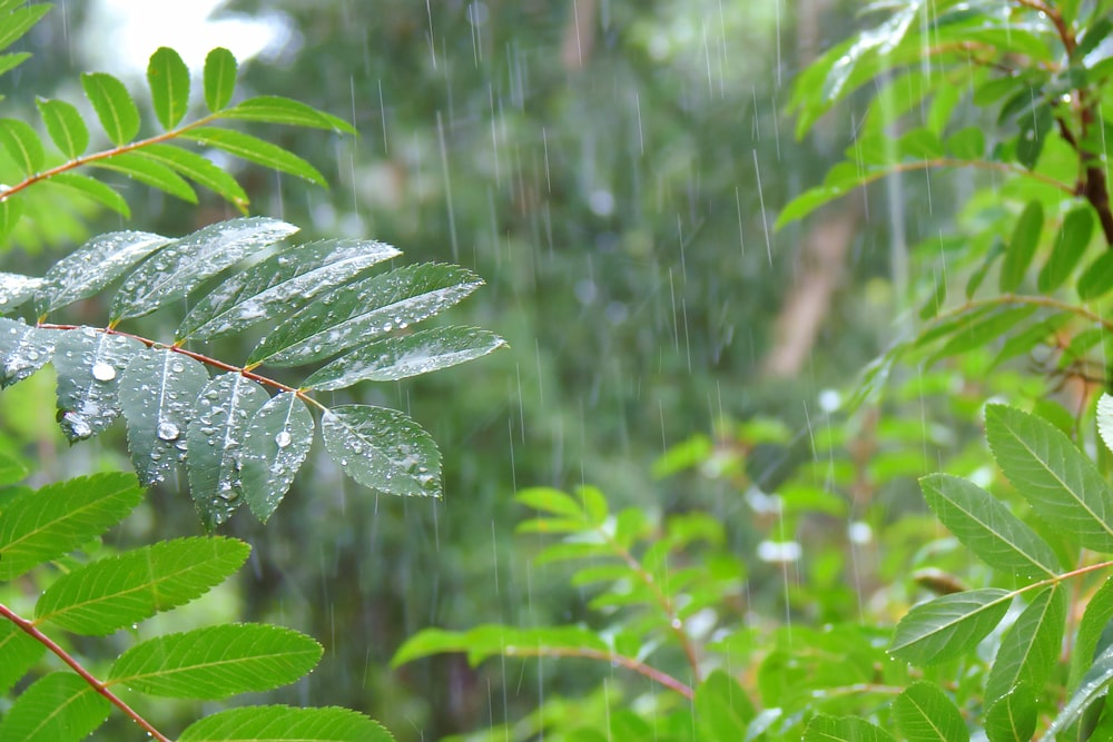 TALKING GARDENING with DOUG - A Positive Spin On All This Rainfall
